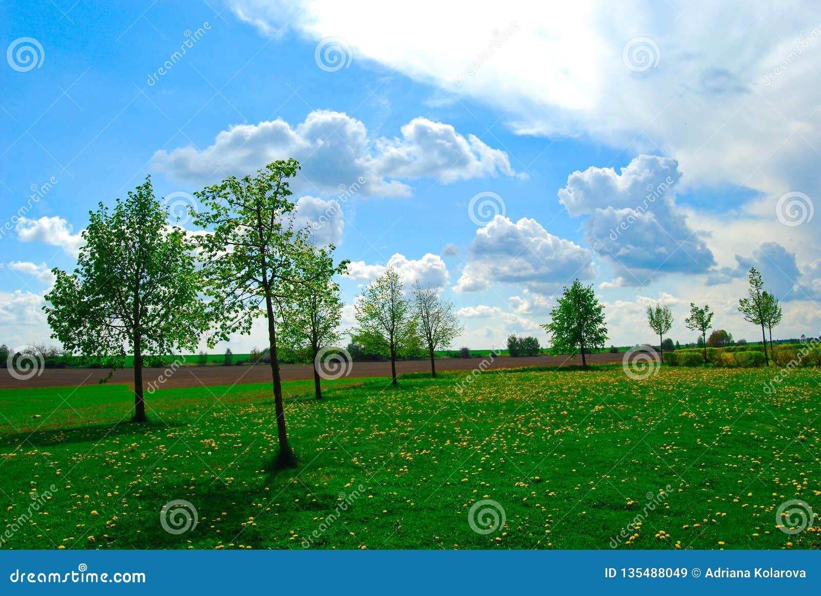 Gröna träd på en blommaäng, ljus dag, vår, Tjeckien