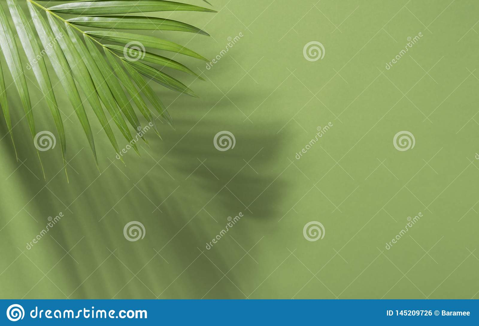 Gröna tropiska palmblad på grön bakgrund med solljus L?gger den id?rika l?genheten f?r minsta sommar