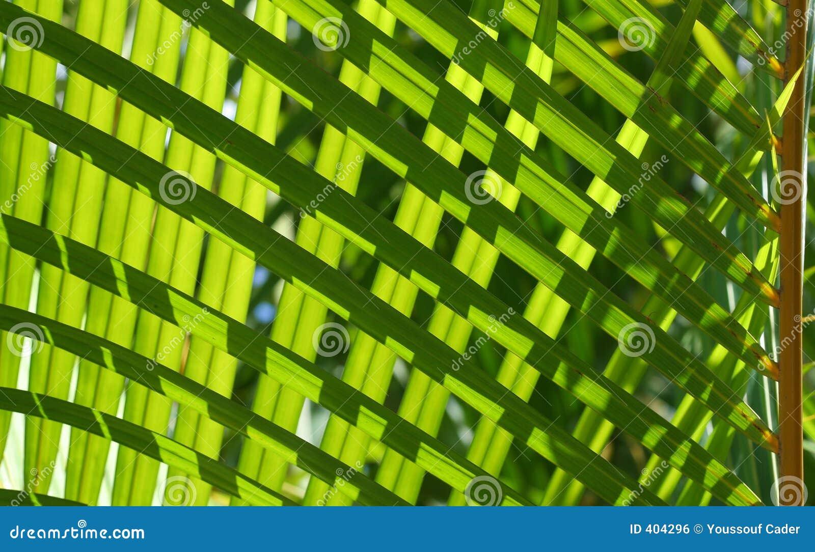 Grönska 3