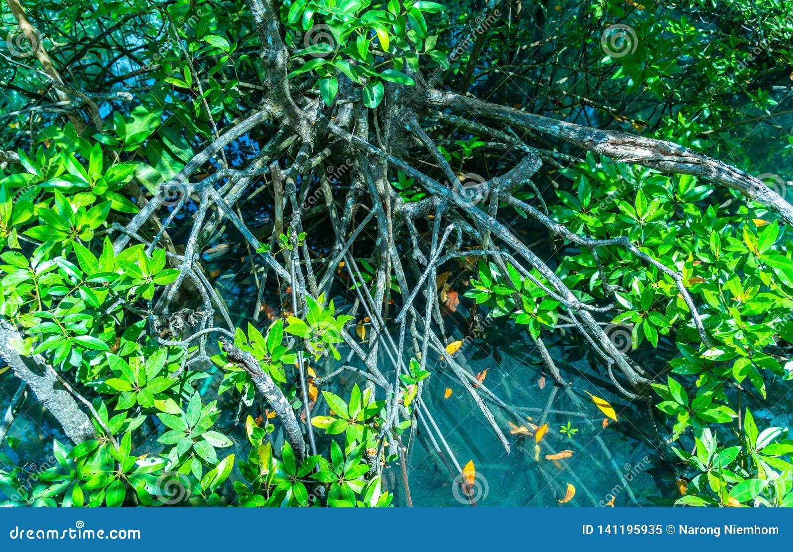 Grönt blad i ett färdigt träsk stället av vatten för smaragdgräsplan