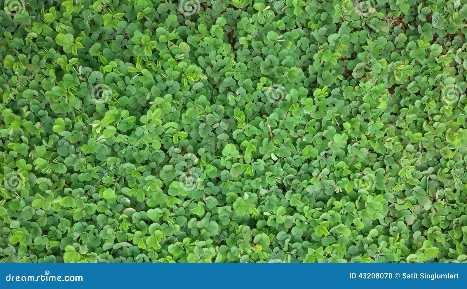 Download Grönt golv arkivfoto. Bild av green, golv, gott, moment - 43208070