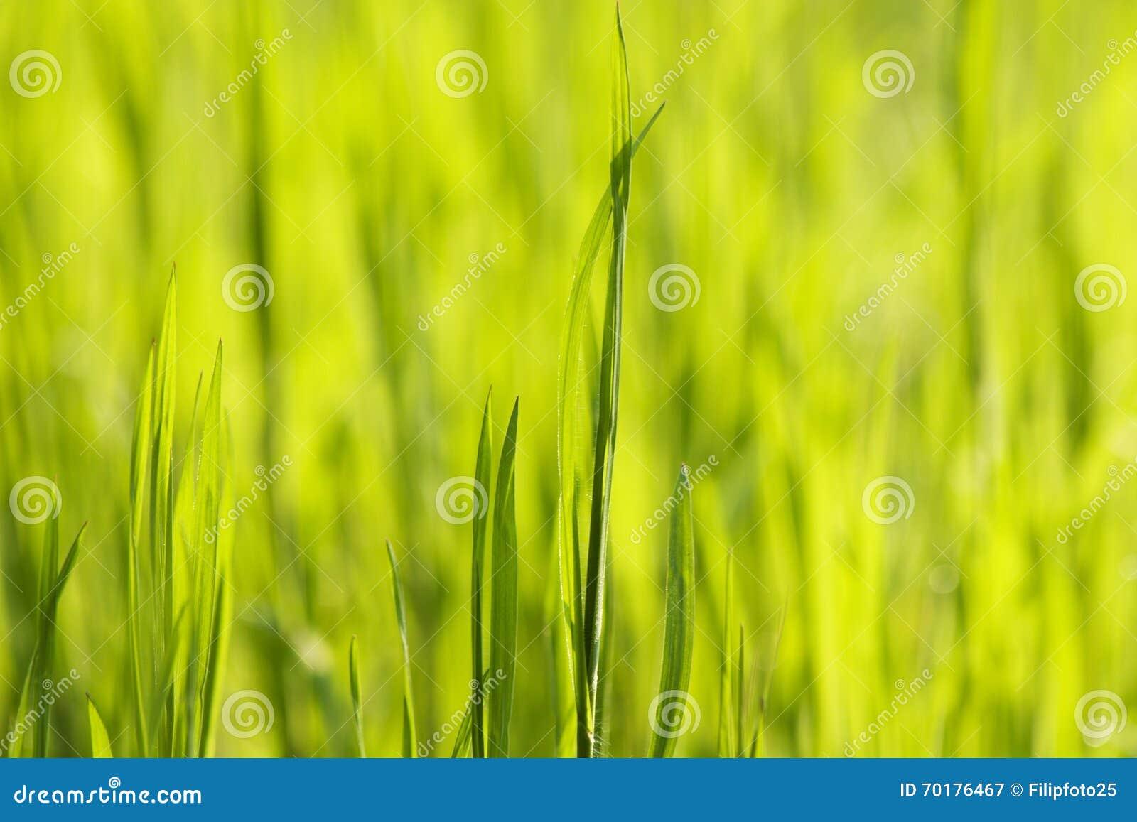 Grönt gräs