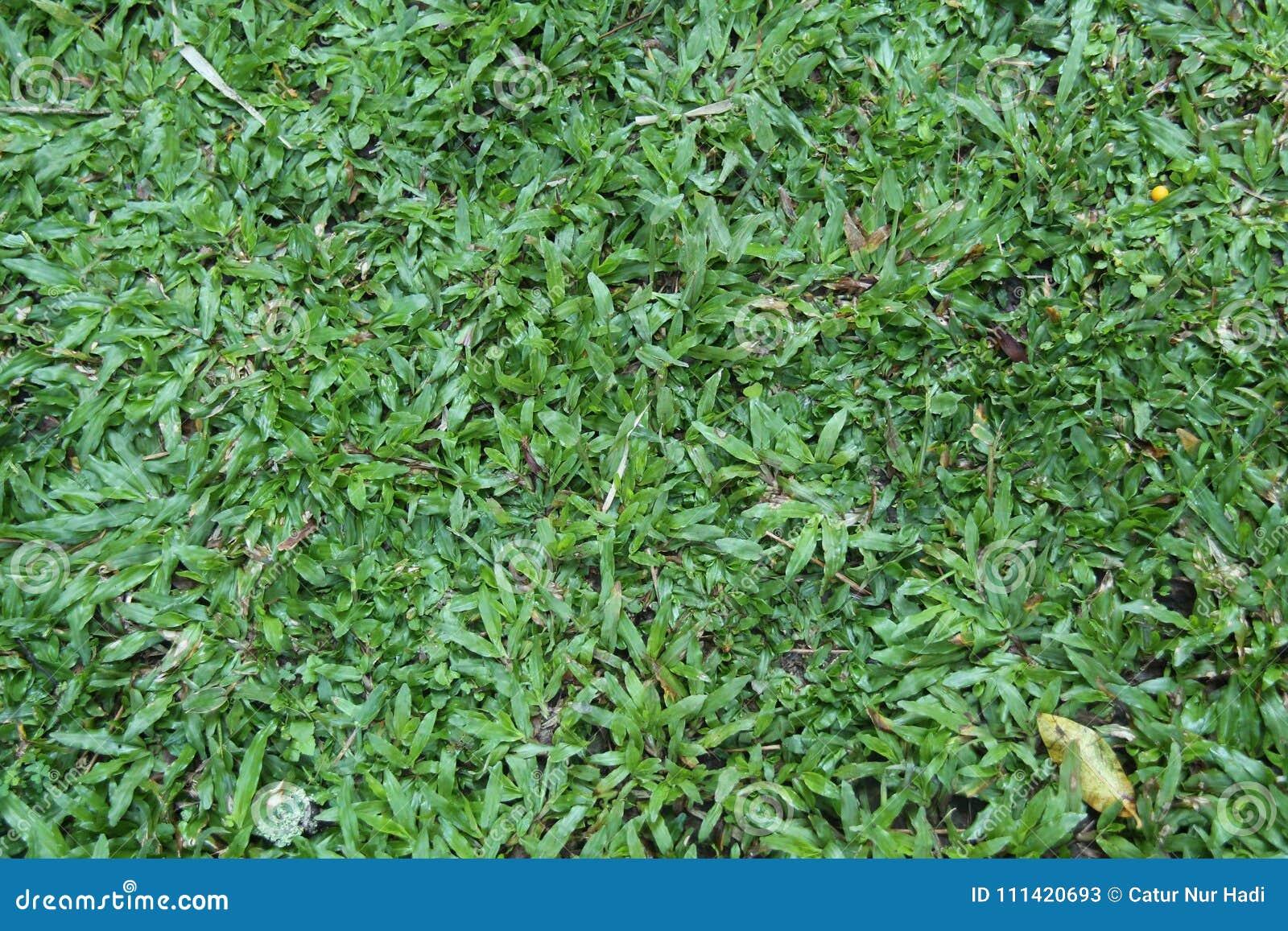 Grönt gräs i gården