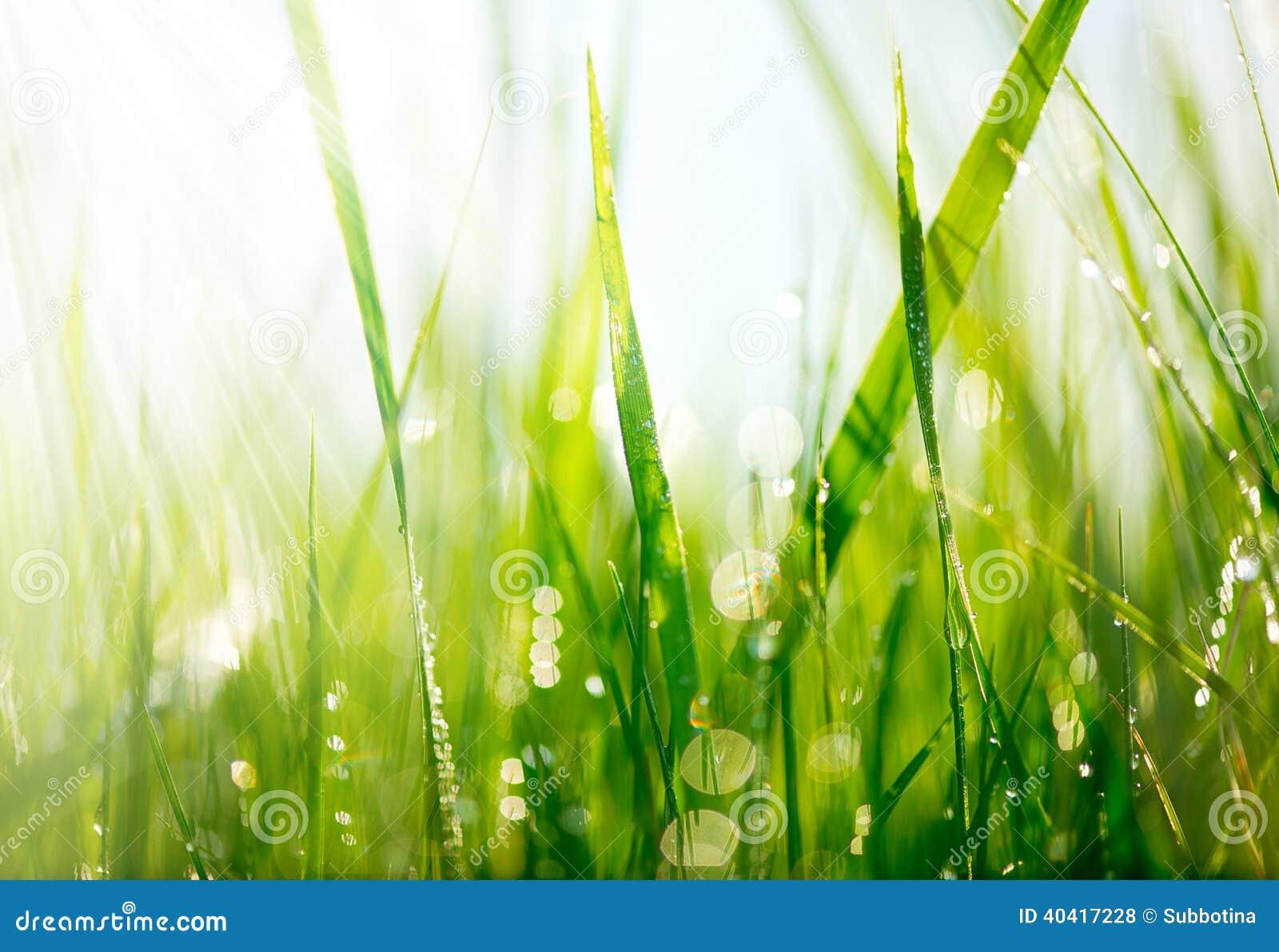 Grönt gräs med daggdroppar