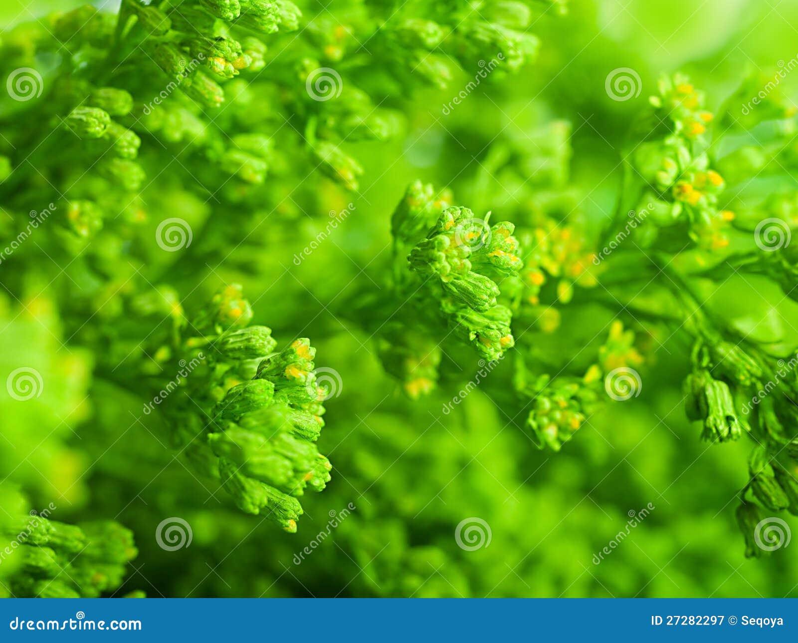Grönt sommargräs