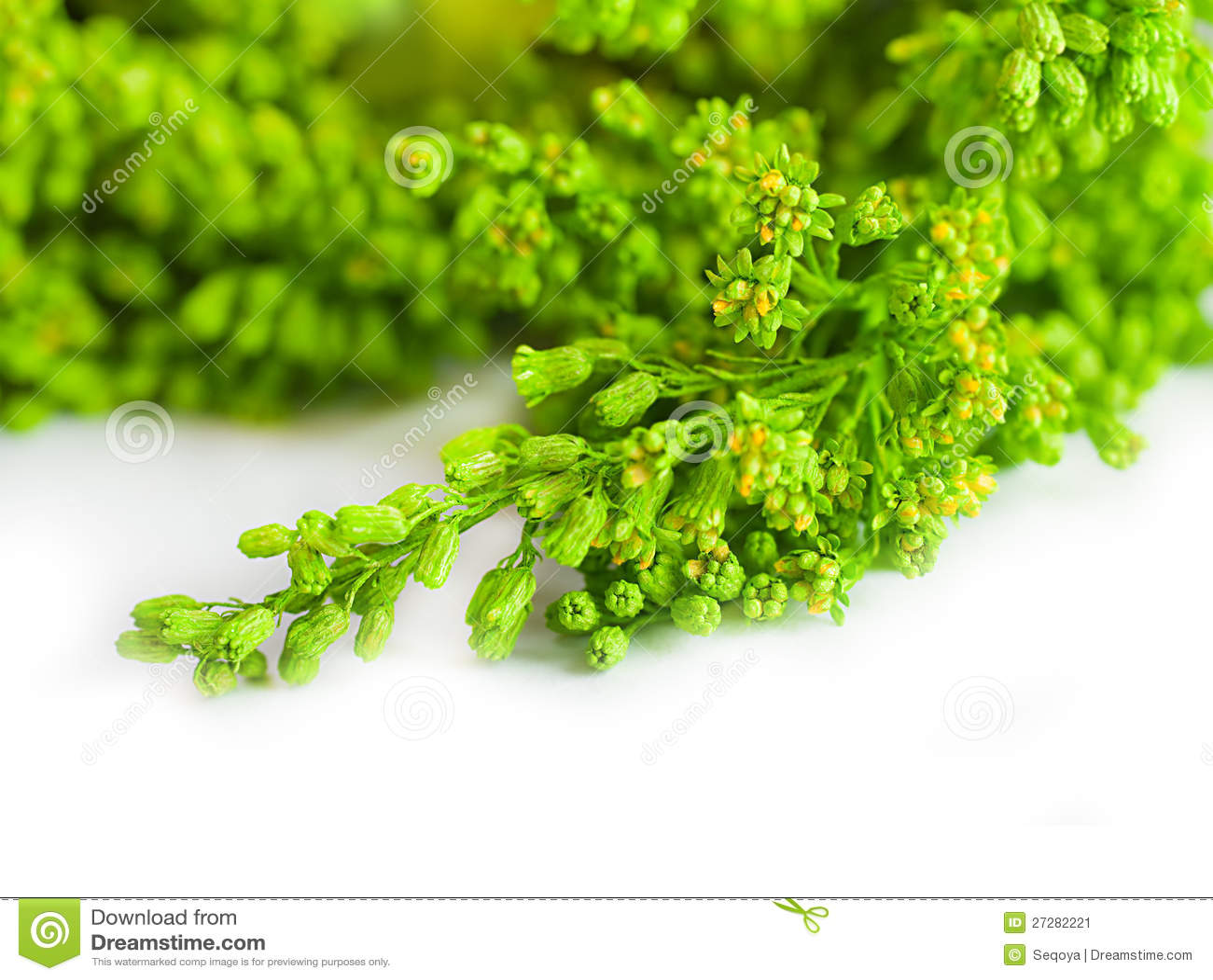 Grönt sommargräs i en sun
