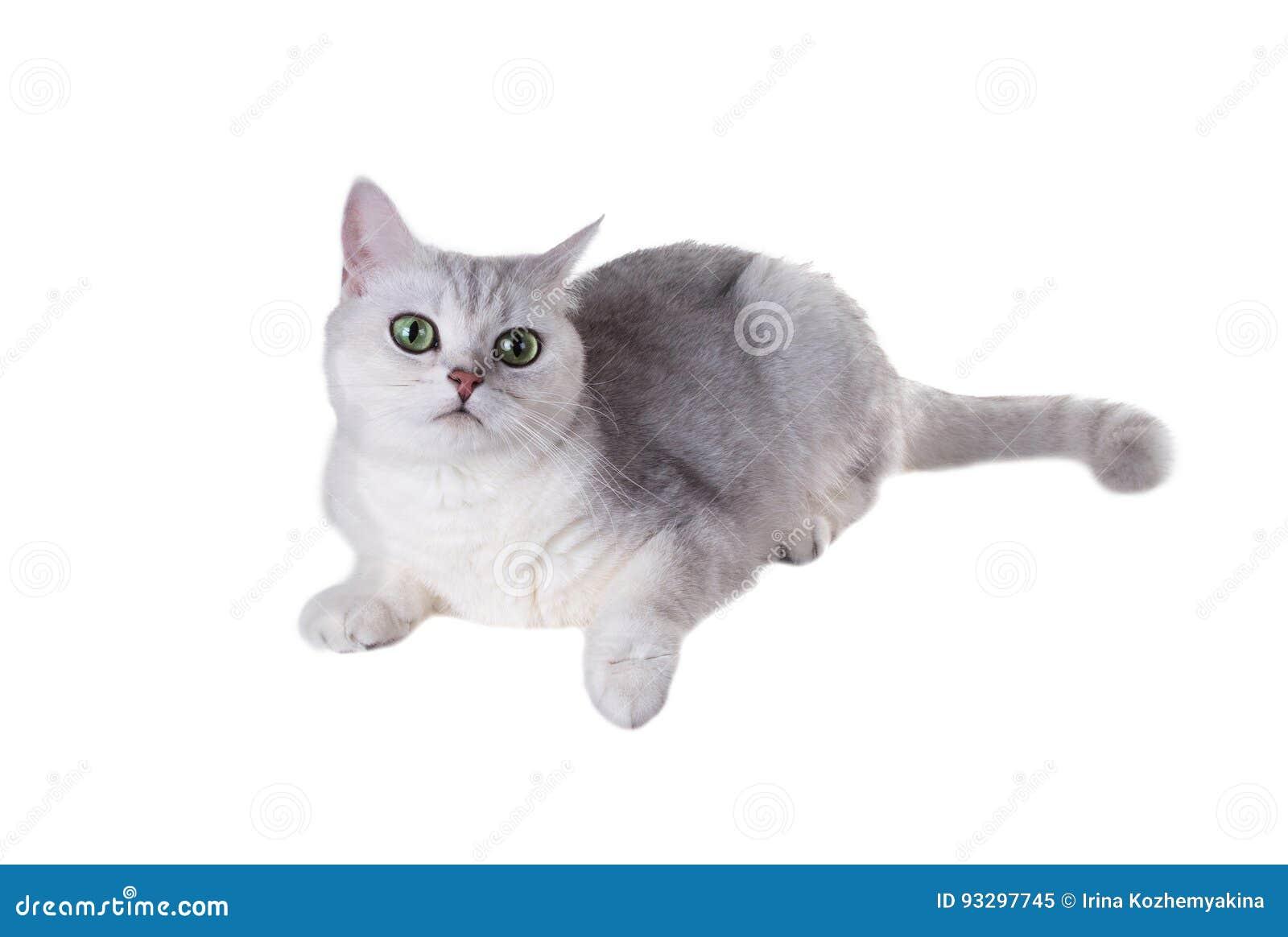 Fein Pete Die Katze Malvorlagen Fotos - Beispiel Wiederaufnahme ...