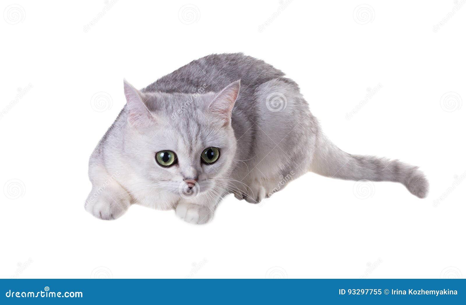 Fein Katze Farbung Seite Fotos - Druckbare Malvorlagen - amaichi.info