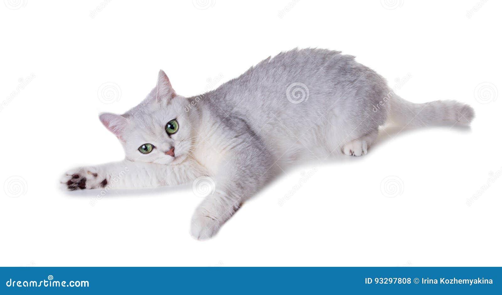 Niedlich Cheshire Katze Färbung Seite Galerie - Malvorlagen Von ...