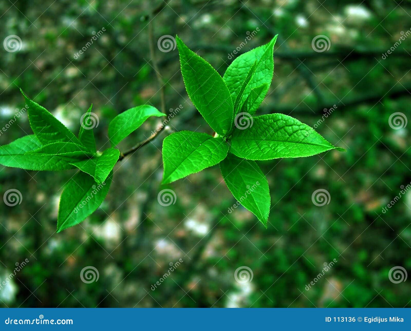 Grün auf Grün
