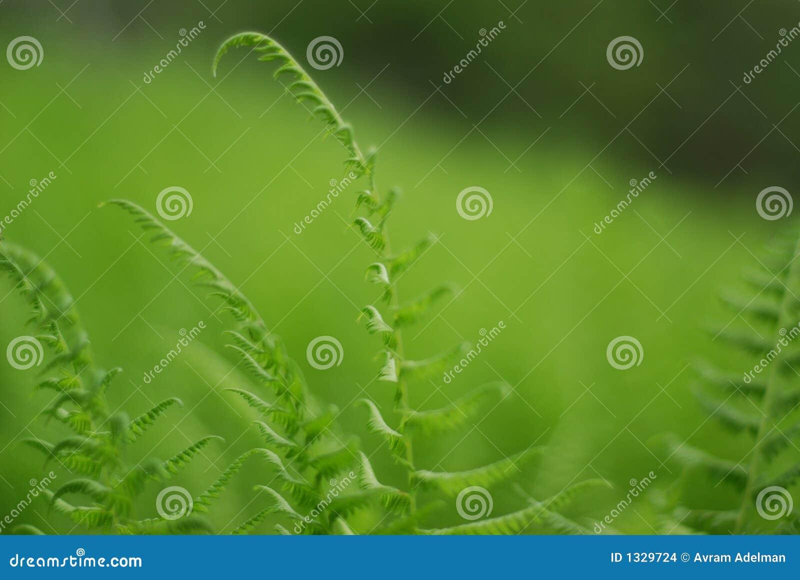 Grün in einem Meer des Grüns