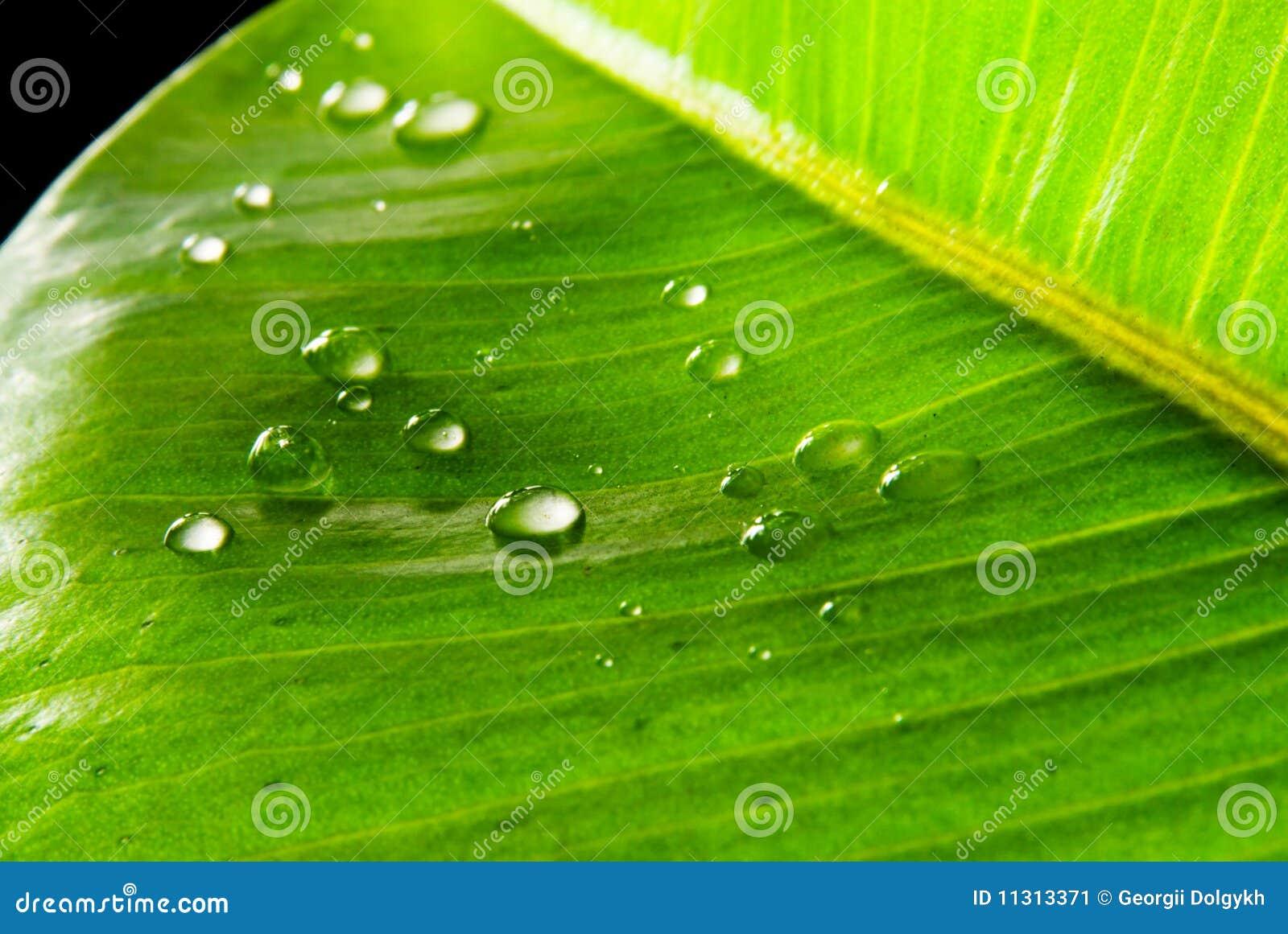 Grünblätter abgedeckt mit waterdrops
