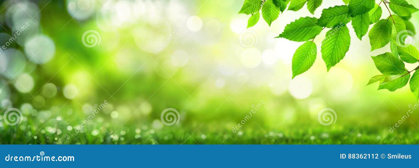 Grünblätter auf bokeh Naturhintergrund