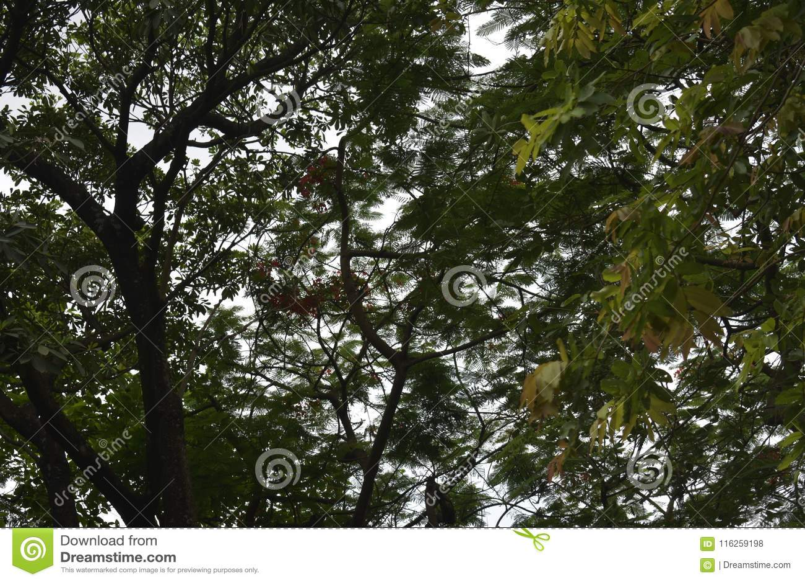 Baum Blätter Stock Images - Download 353 Photos