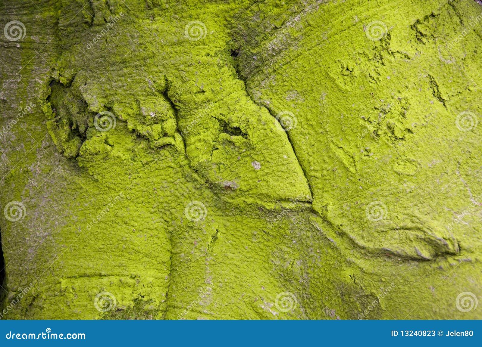 Grüne Baumbarke