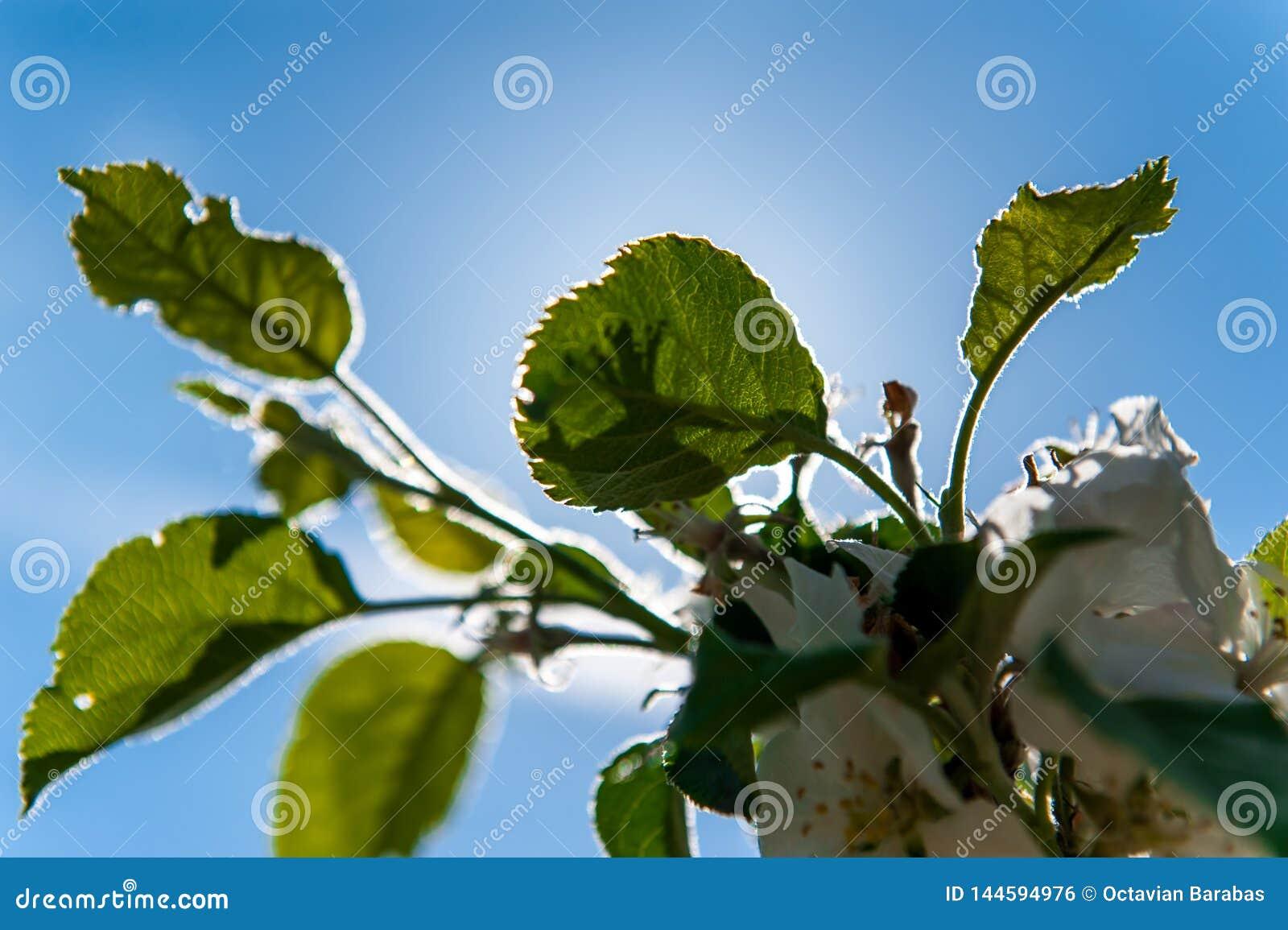 Grüne Baumblätter und blauer Himmel mit Rücklicht