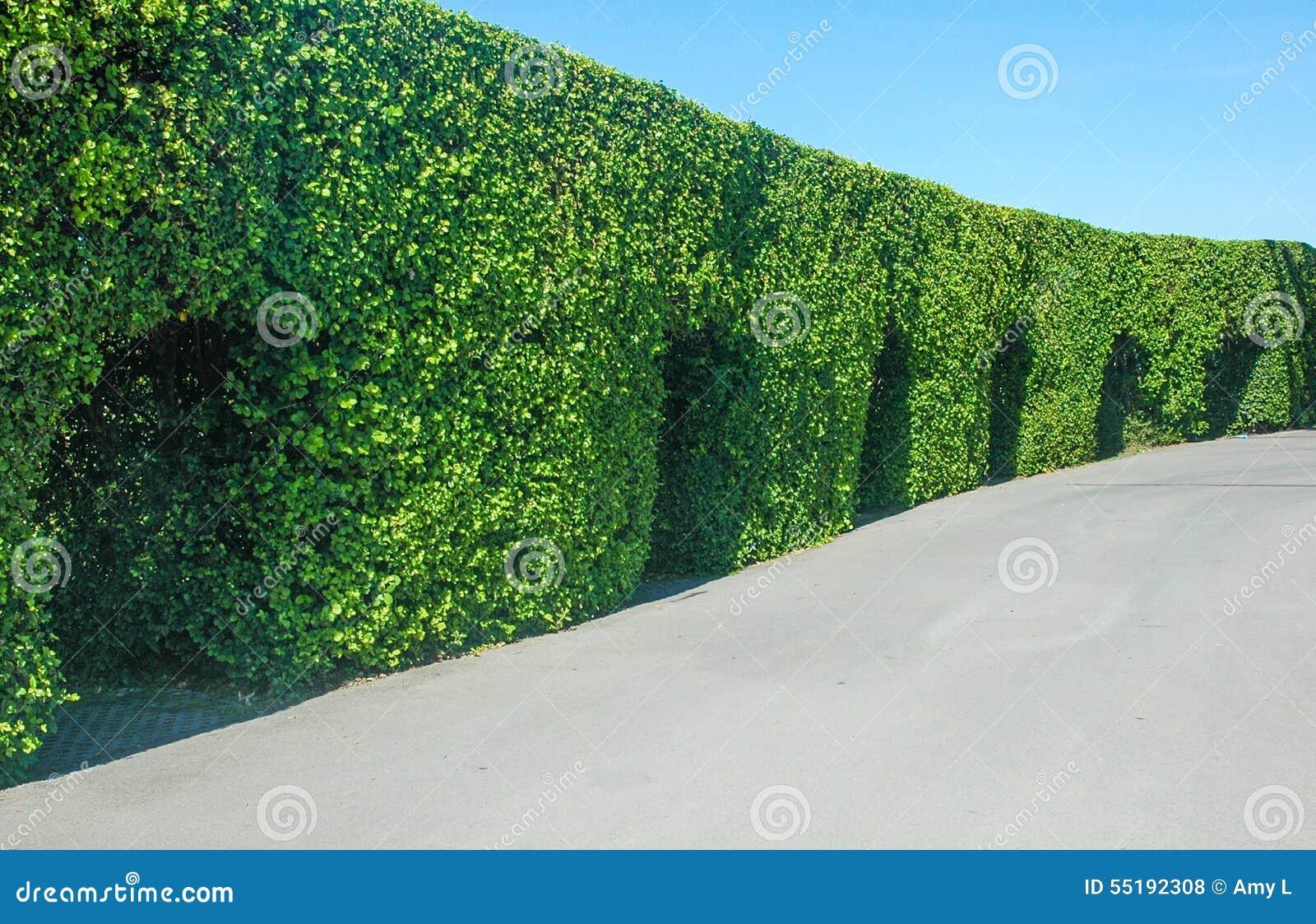 Grüne Baumgartenlandschaft im Freien