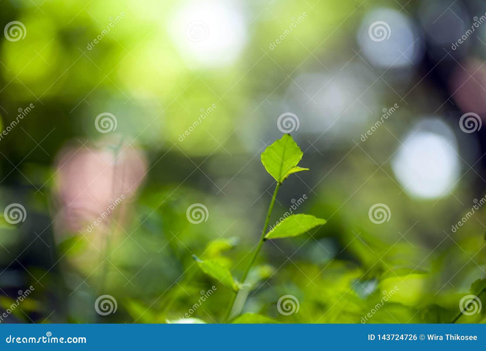 Grüne Blätter und Niederlassung auf unscharfem Hintergrund