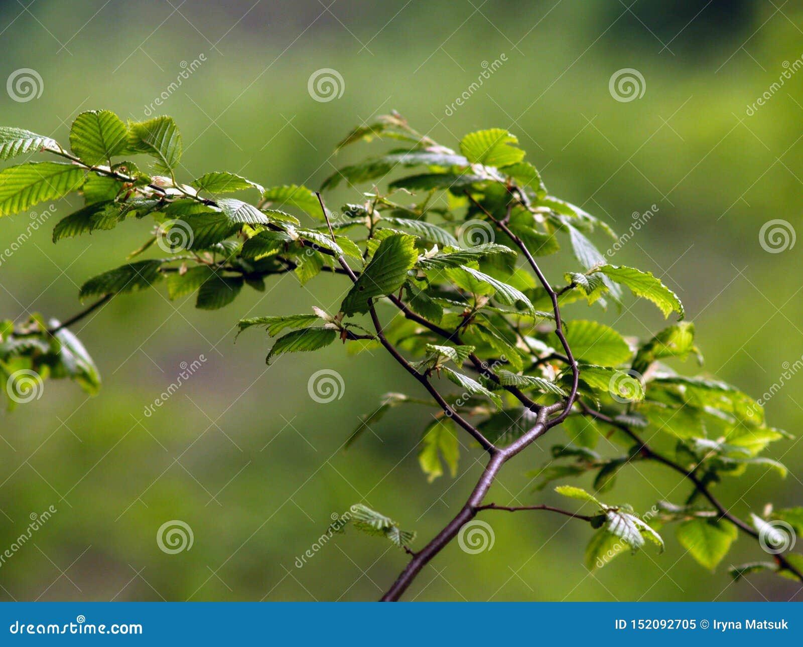 Grüne Blätter und Niederlassungen schließen oben