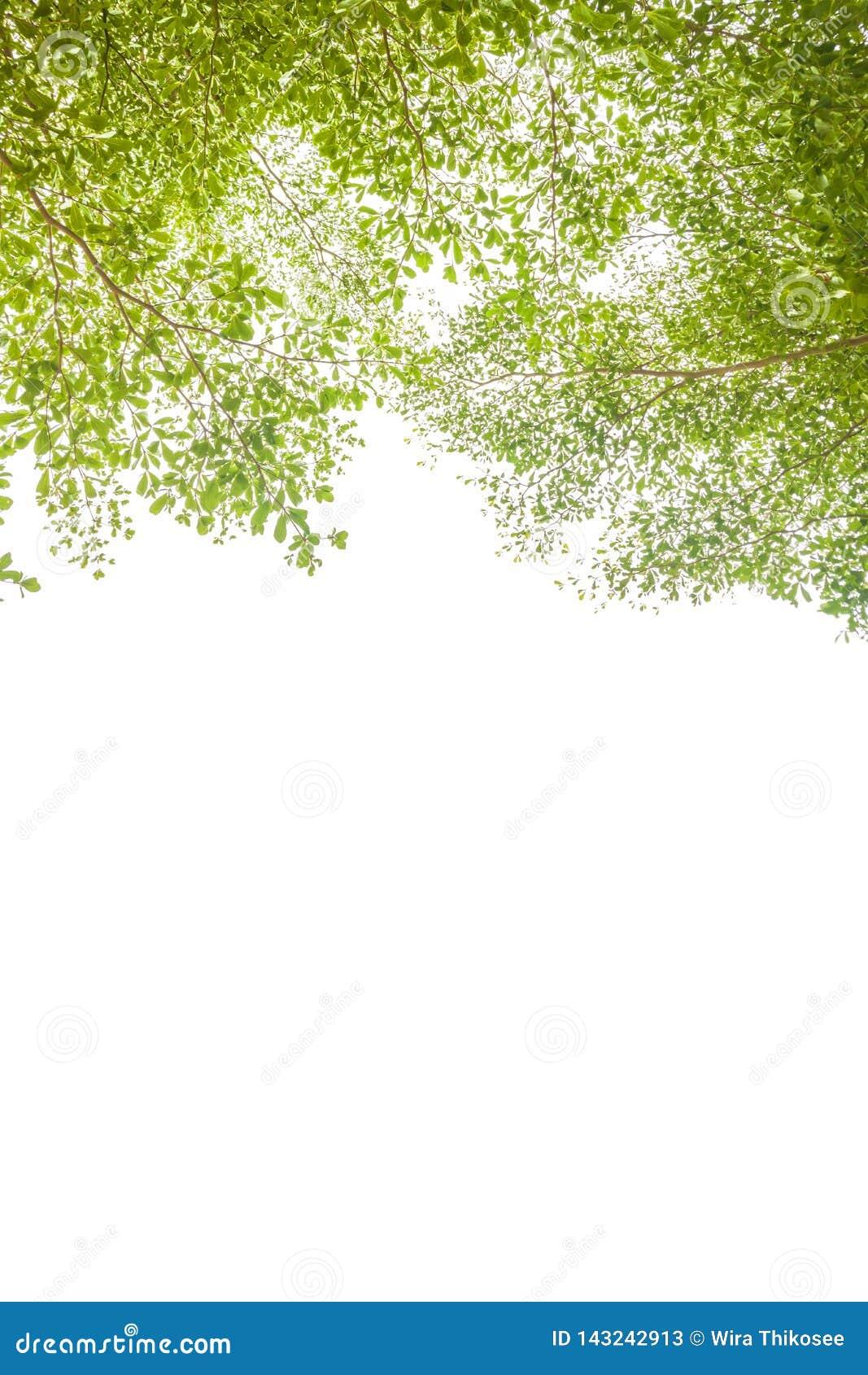 Grüne Blätter und Niederlassungshintergrund mit Kopienraumtext