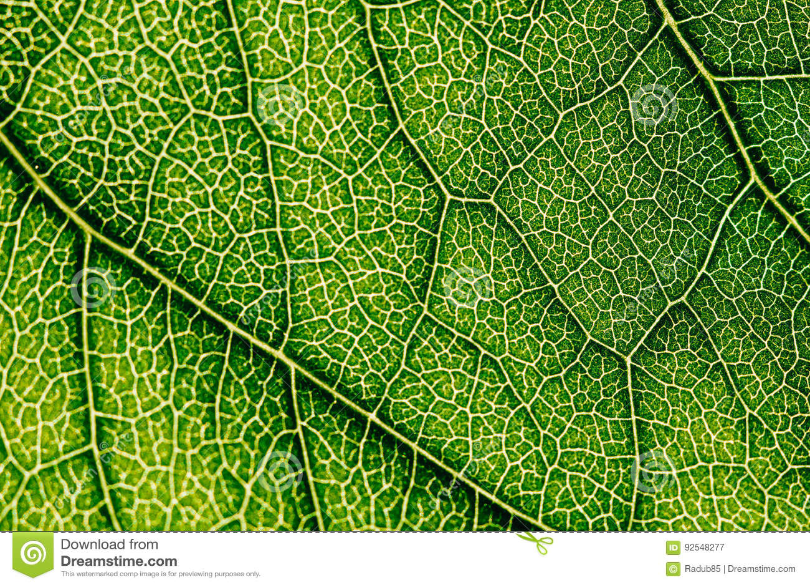 Grüne Blatt-Beschaffenheit mit den sichtbaren Stomata, welche die Epidermis-Schicht umfassen