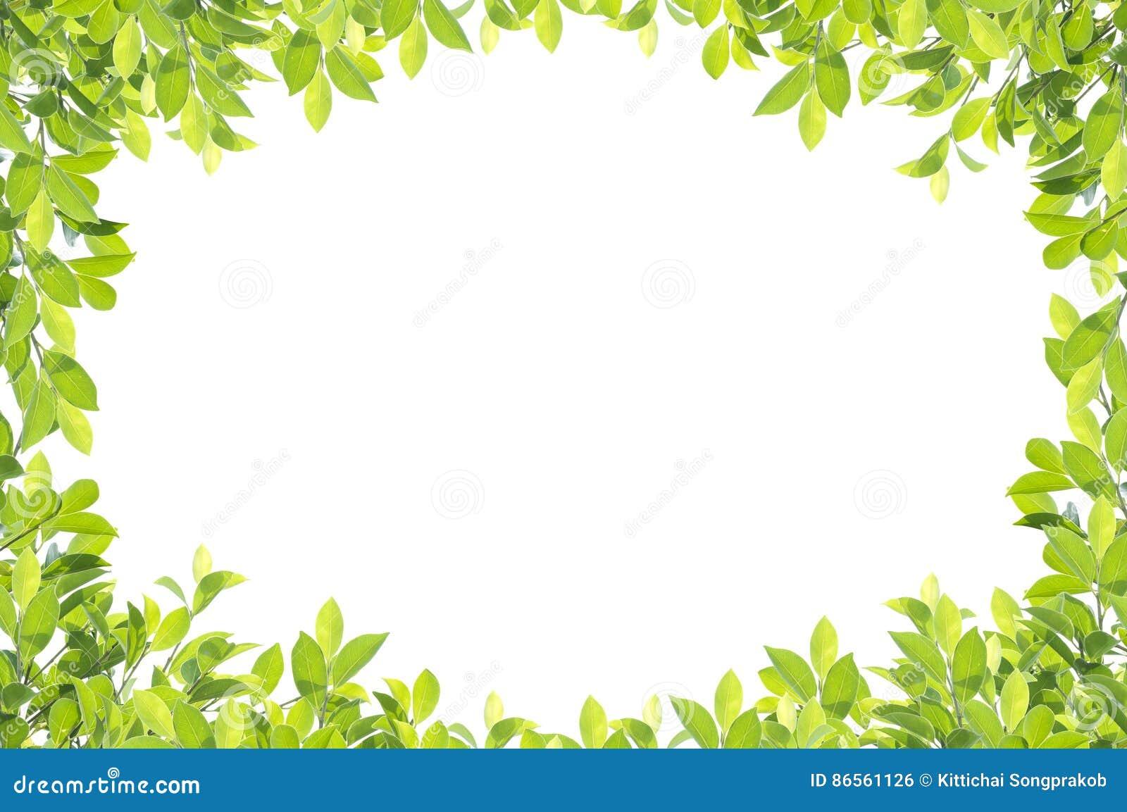 Grüne Blattgrenze auf weißem Hintergrund