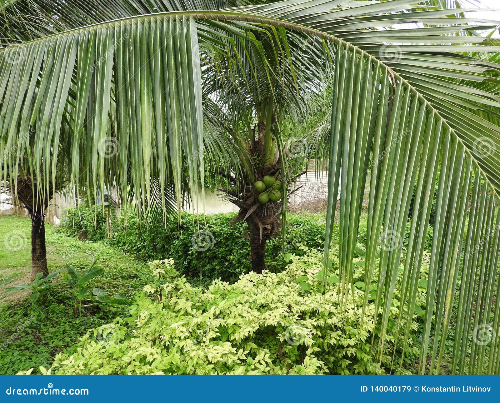 Grüne Dickichte in den Dschungeln von Thailand in Phuket an einem vollen Tag