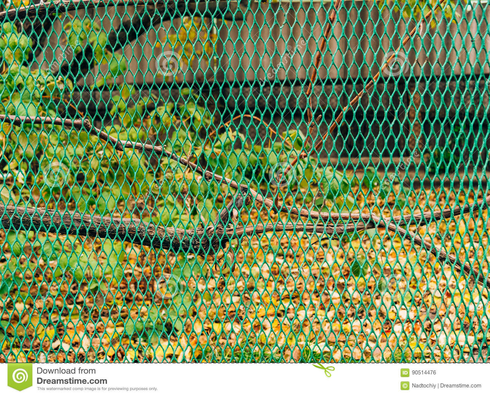 Grüne Feinmaschige Filetarbeit Grüner Zaun Stockfoto Bild