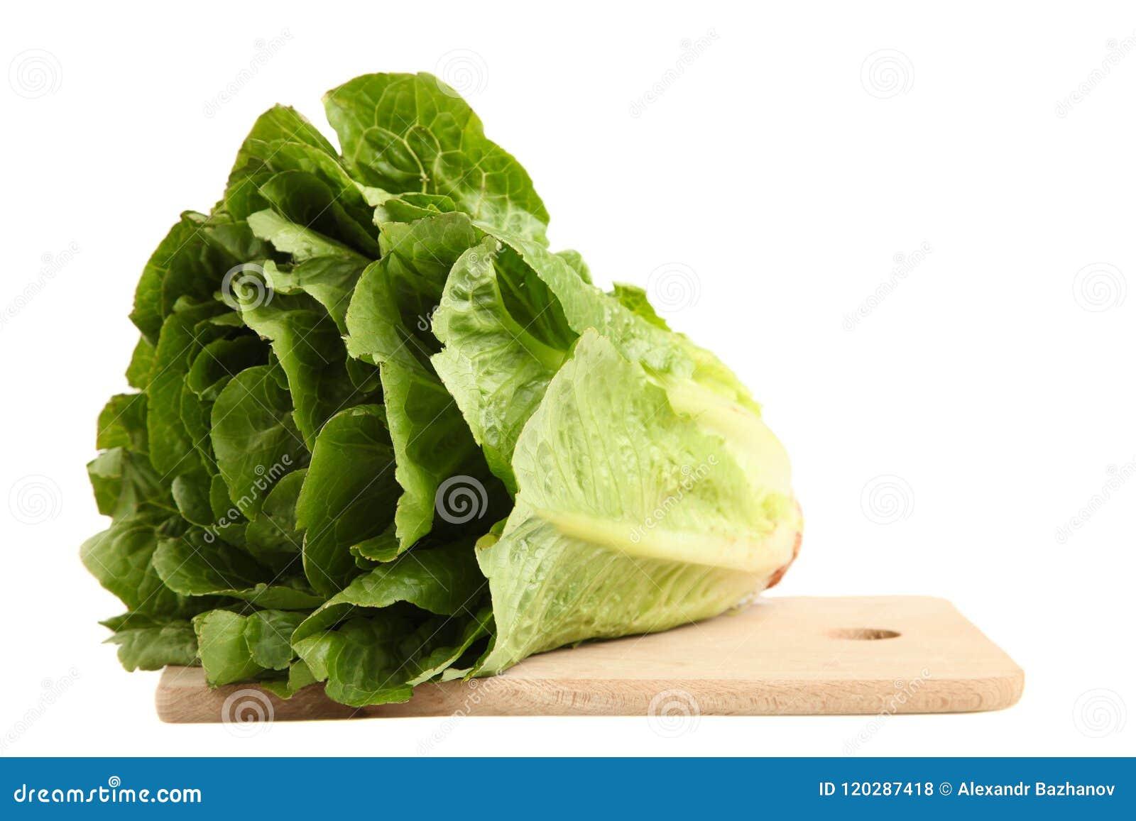 Grüne Kopfsalatsommerendivie