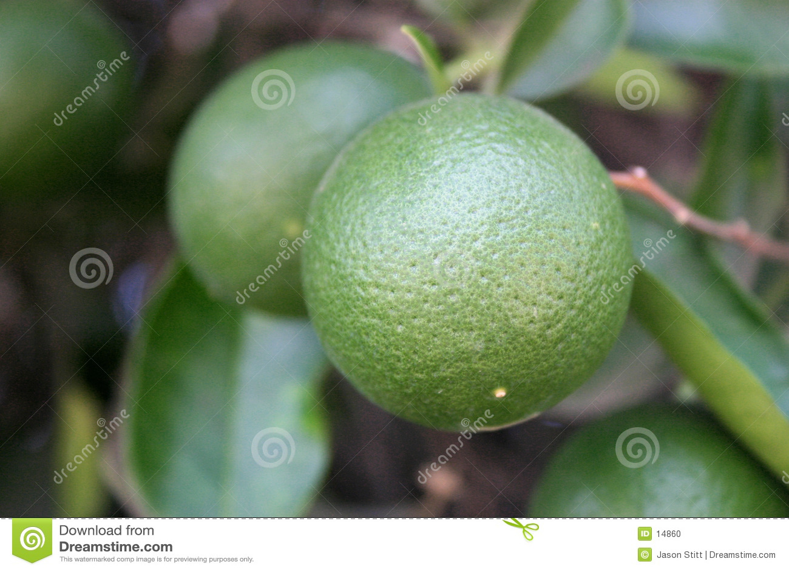 Grüne Orangen