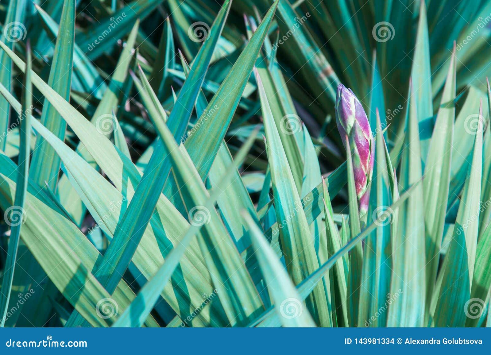 Grüne Palmblätter und Blume