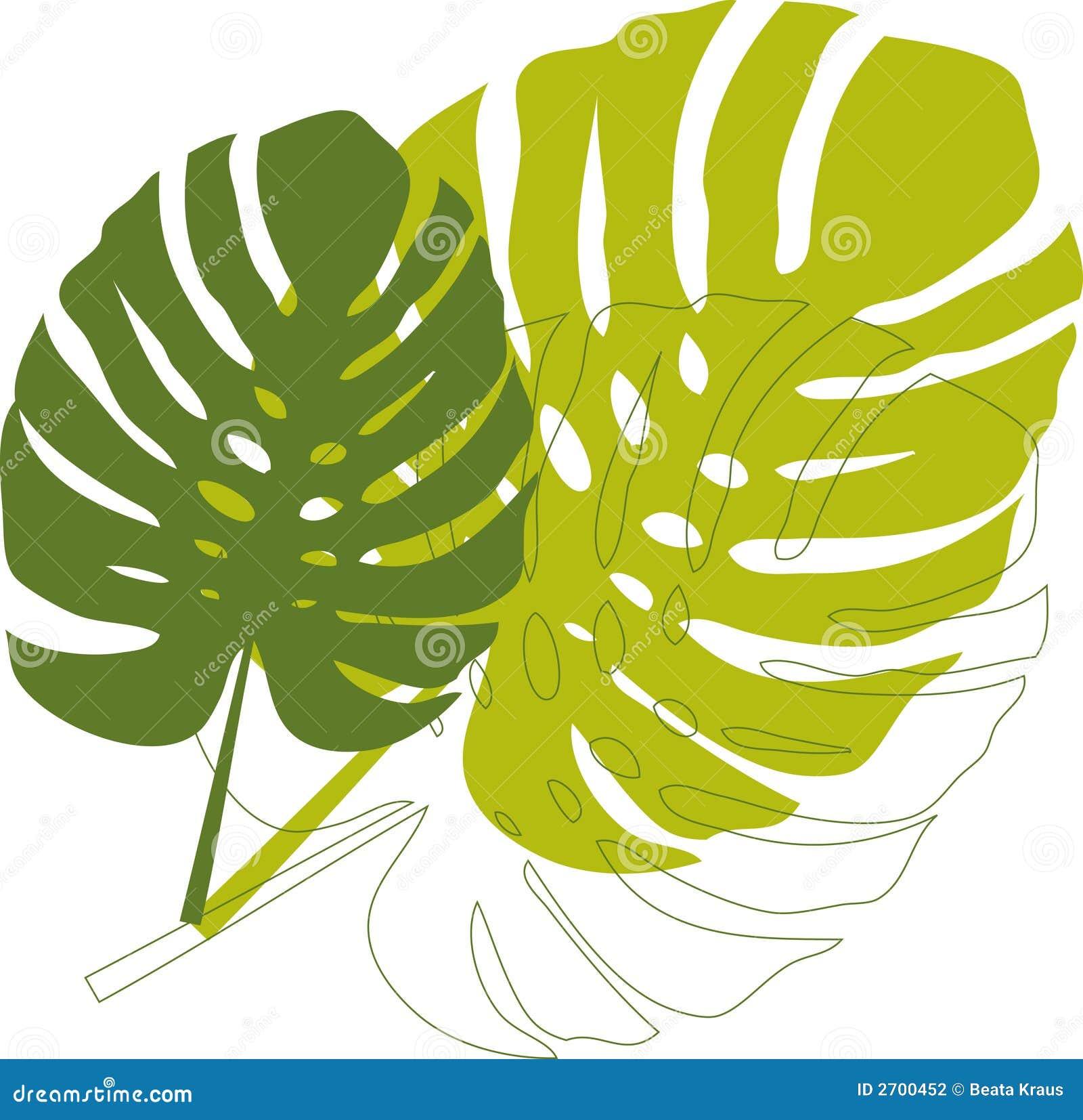 Grüne Philodendronblätter