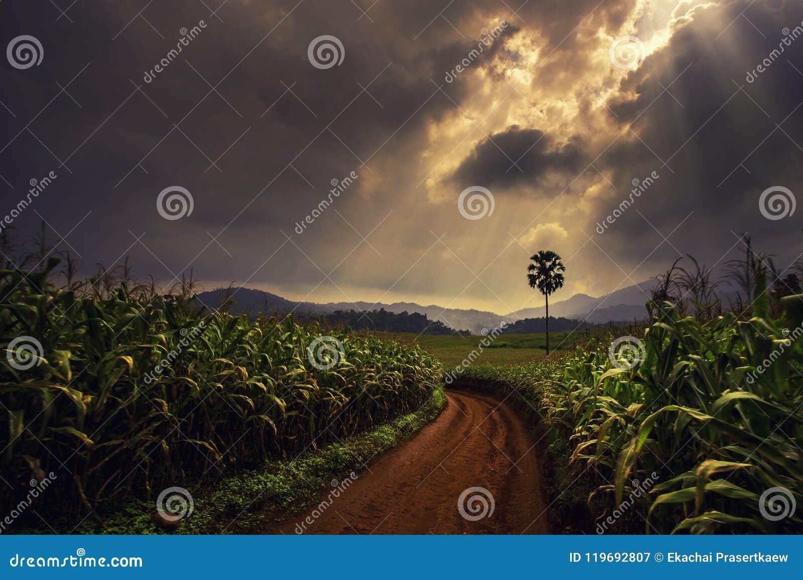 Grüne Straße, Frischluft und Schlamm