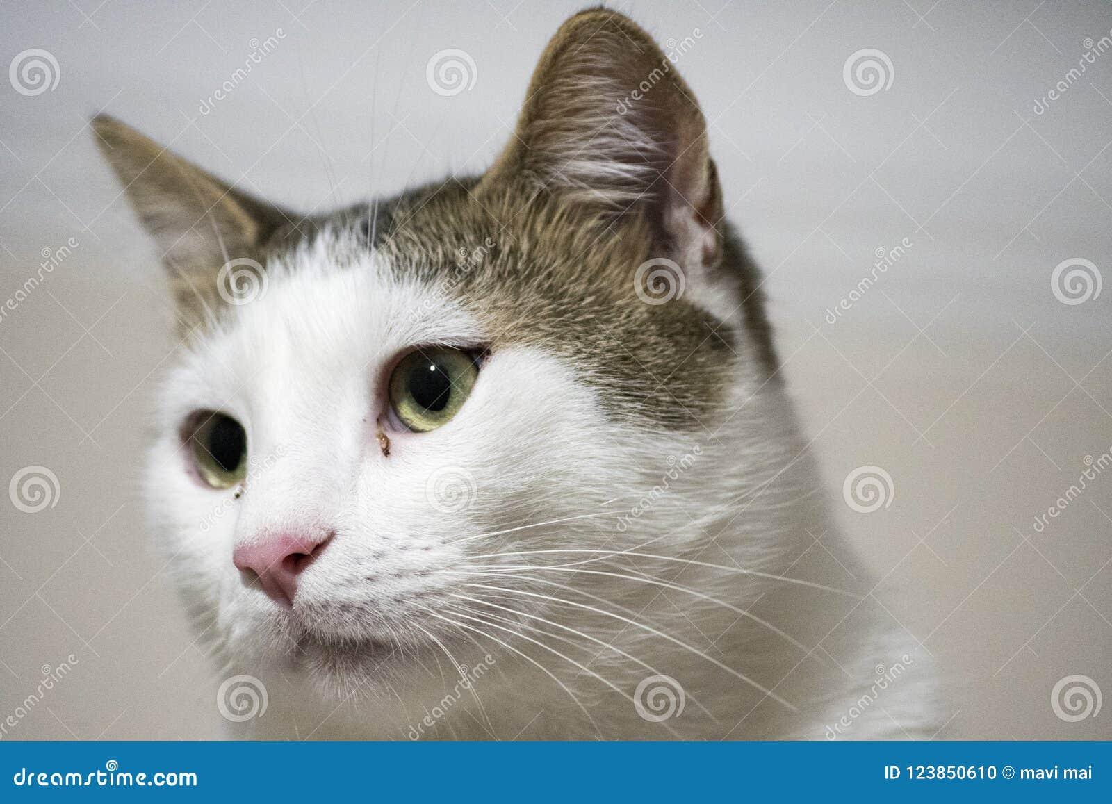Grüne und gelbe Katzenaugen