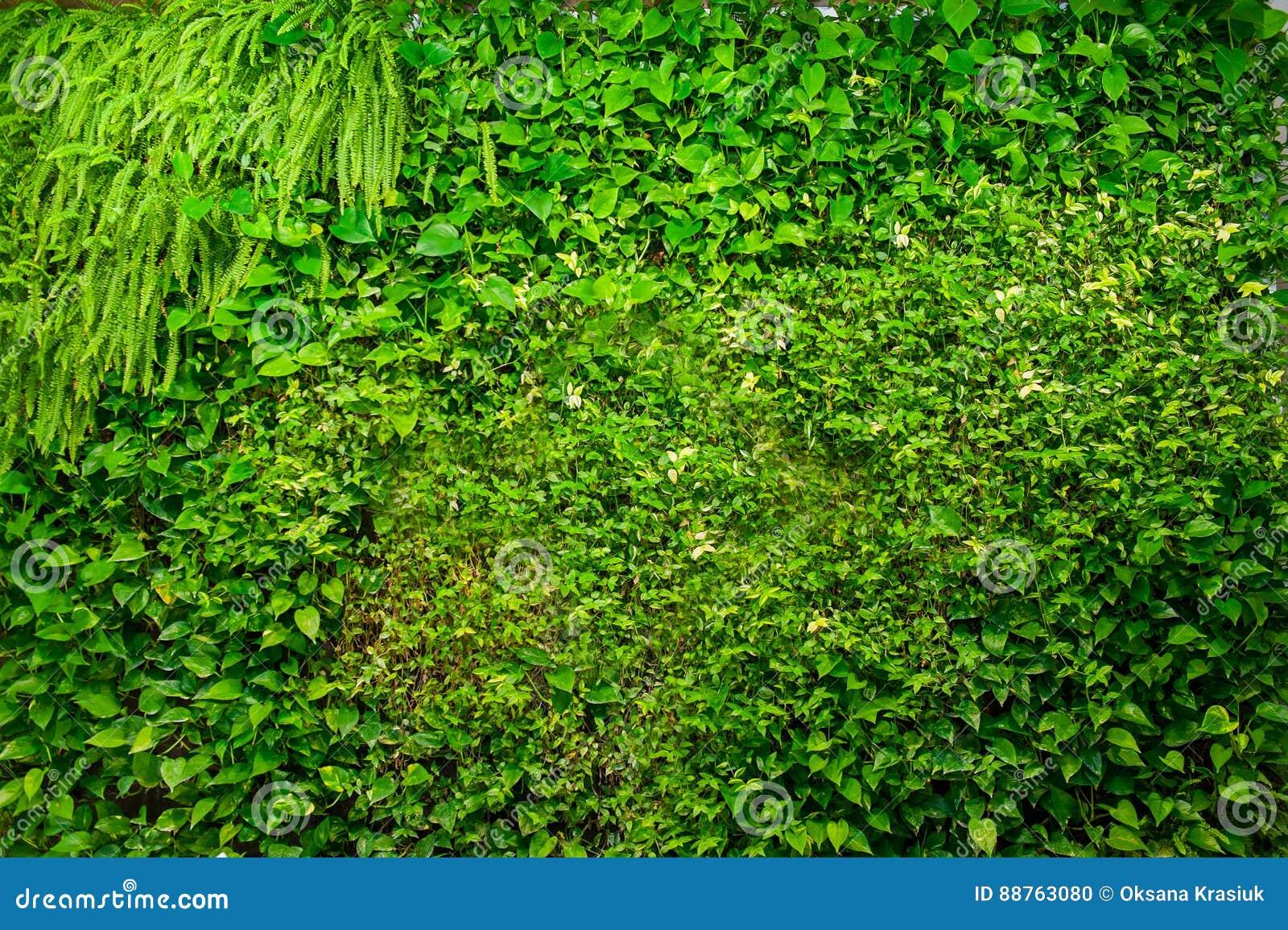 Grüne Wand Von Verschiedenen Laubwechselnden Pflanzen In