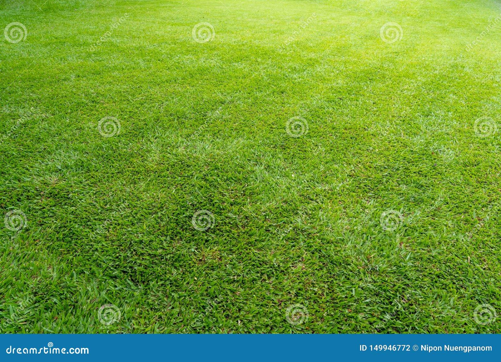 Grüne Wiesenrasenfläche für Hintergrund