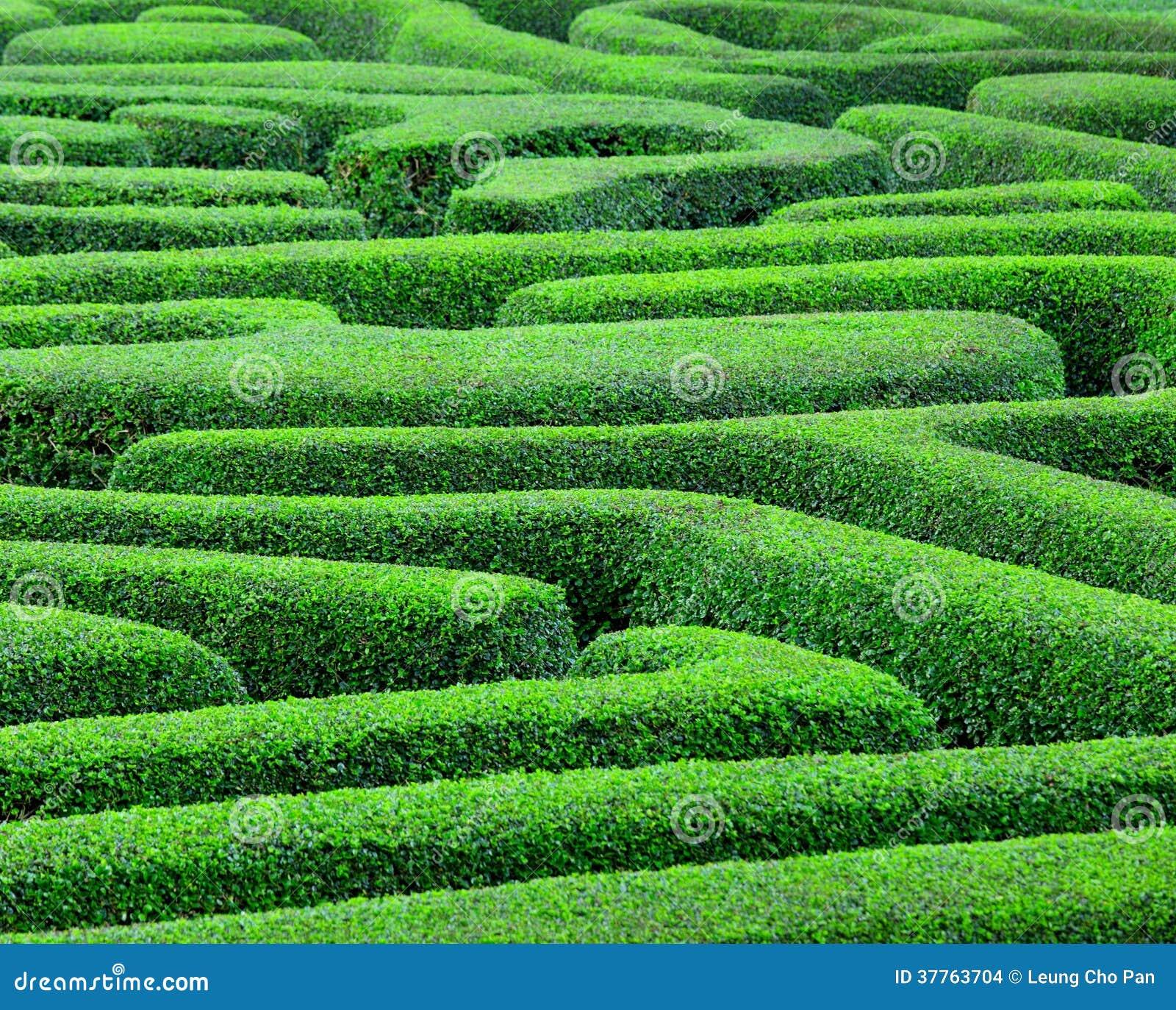 Grünen Sie Labyrinth