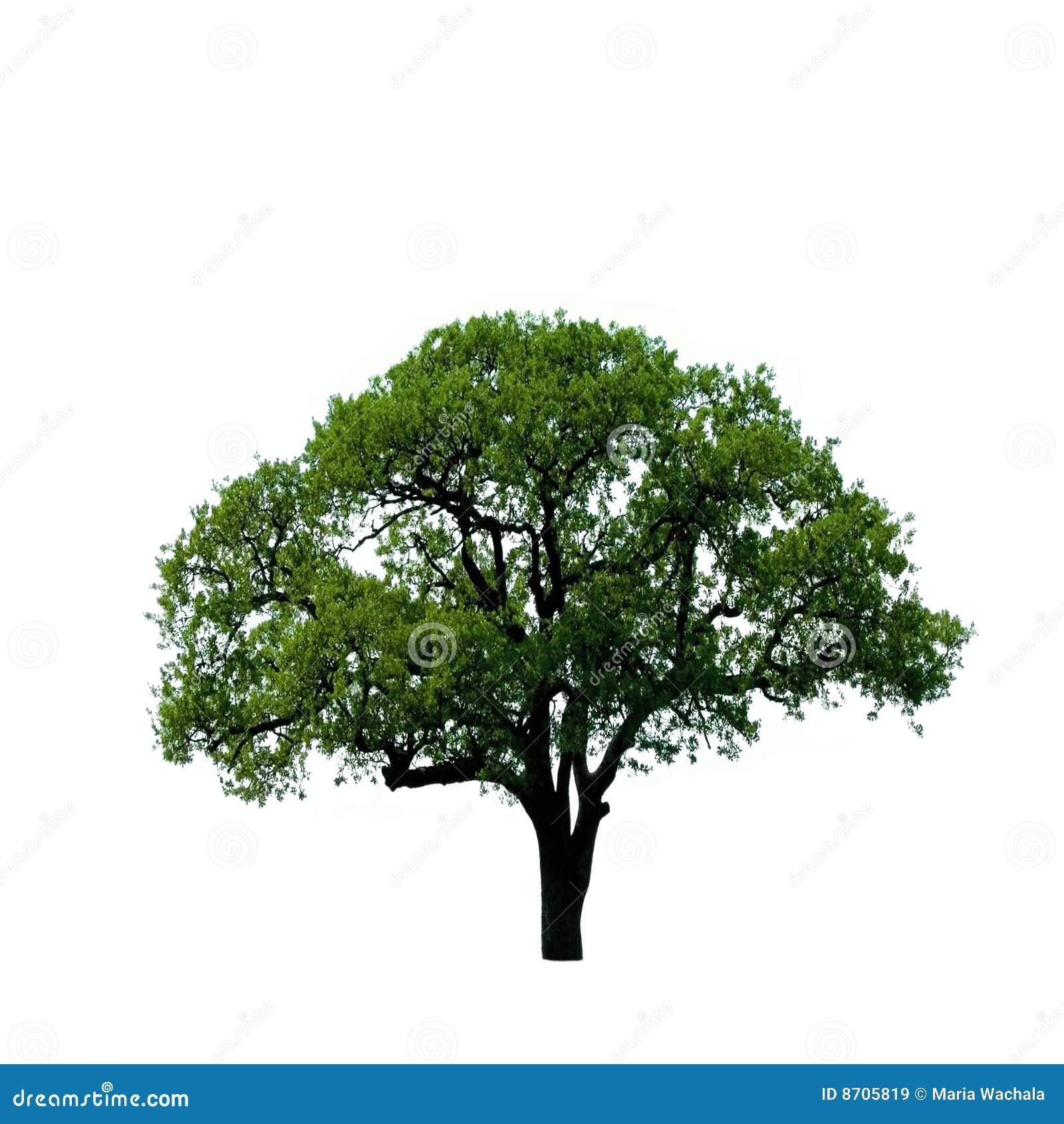 Grüner Baum getrennt