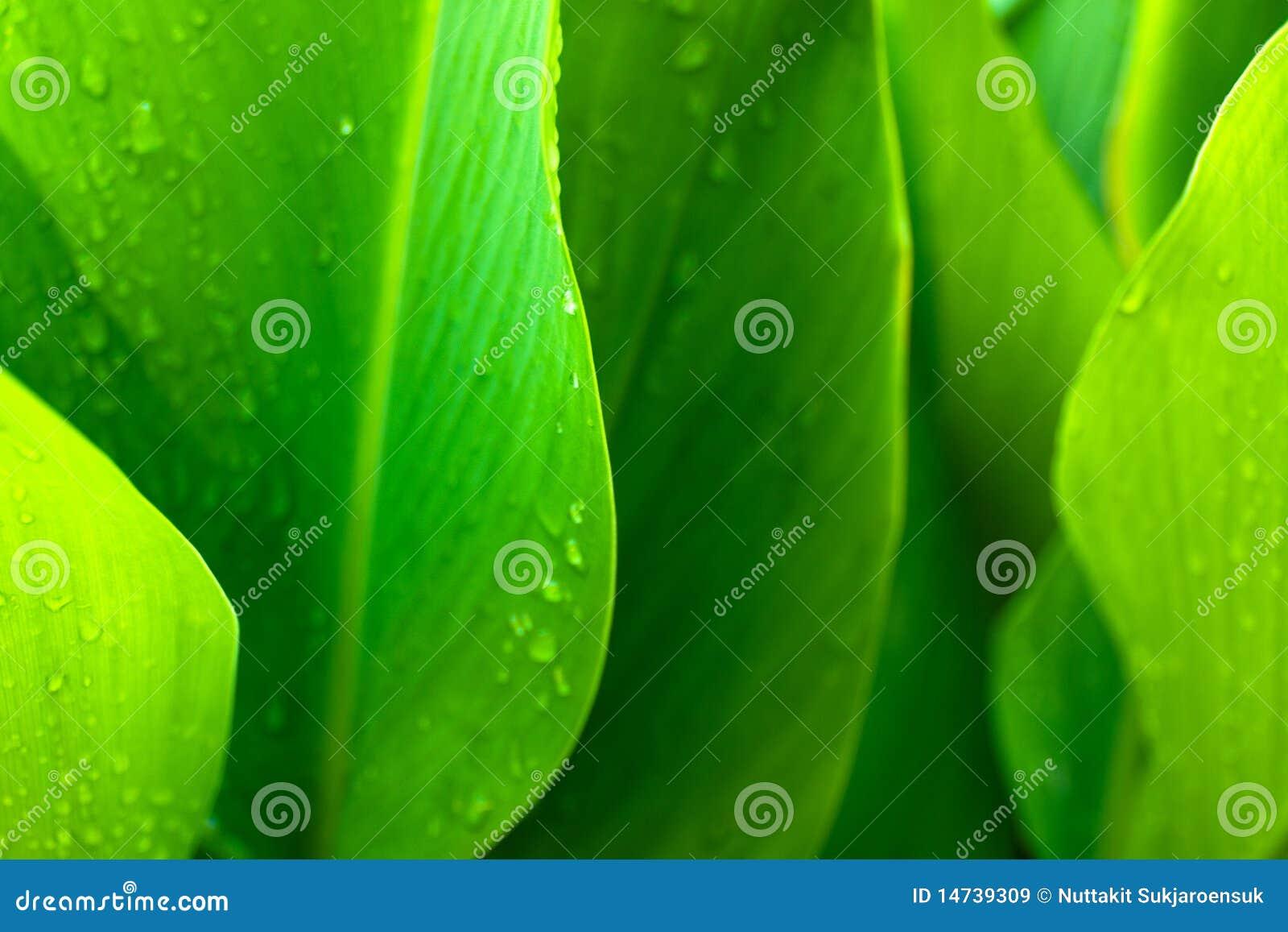 Grüner Blathintergrund