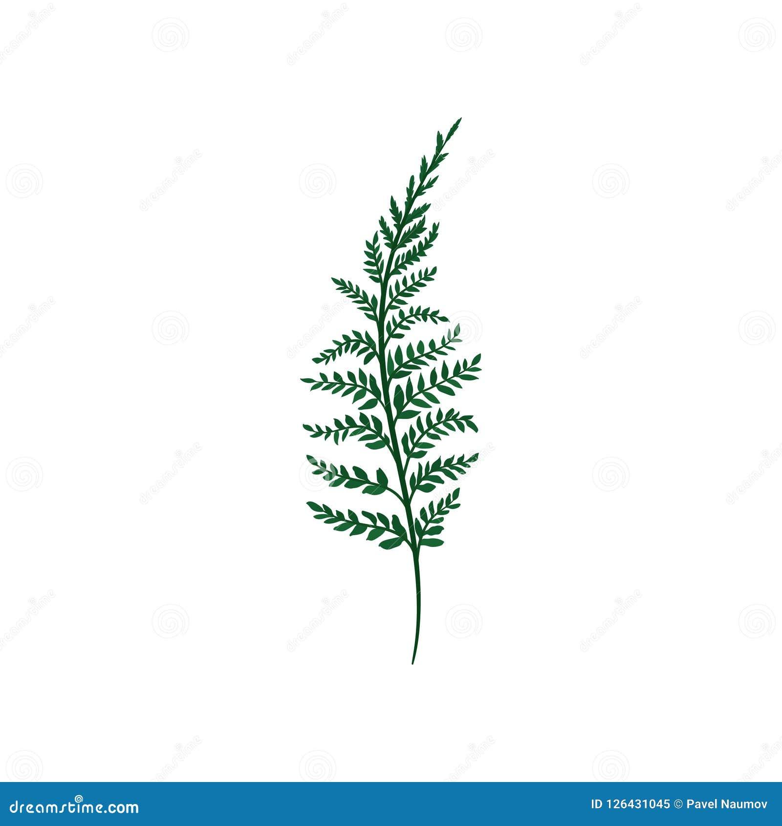 Grüner Farnzweig mit kleinen Blättern Natürliches Element Forest Plant Natur- und Botanikthema Flache Vektorikone
