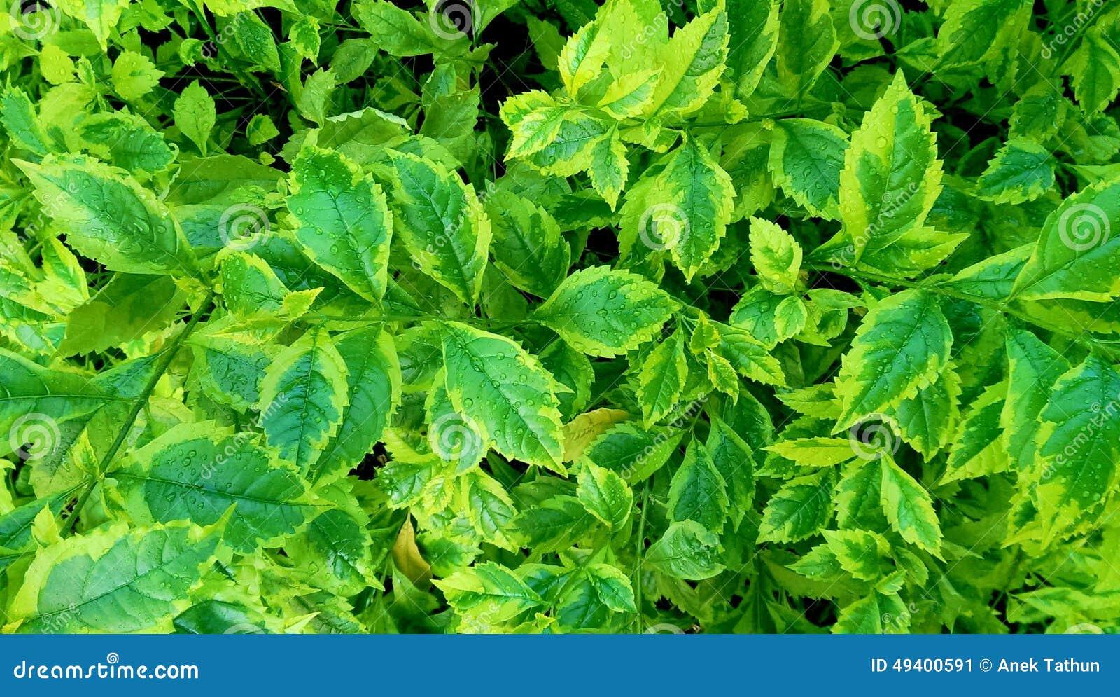 Download Grüner Hintergrund stockbild. Bild von hintergrund, tapete - 49400591