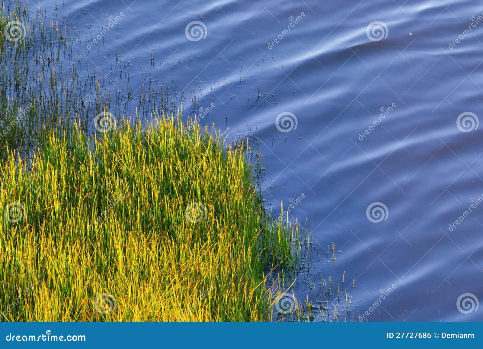 Grüner Horsetail auf der Flussquerneigung