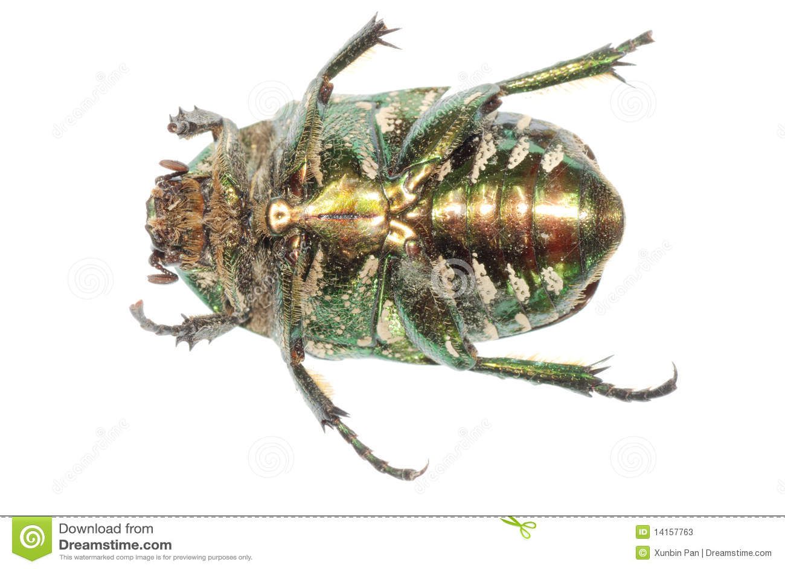 Grüner Insektkäfer