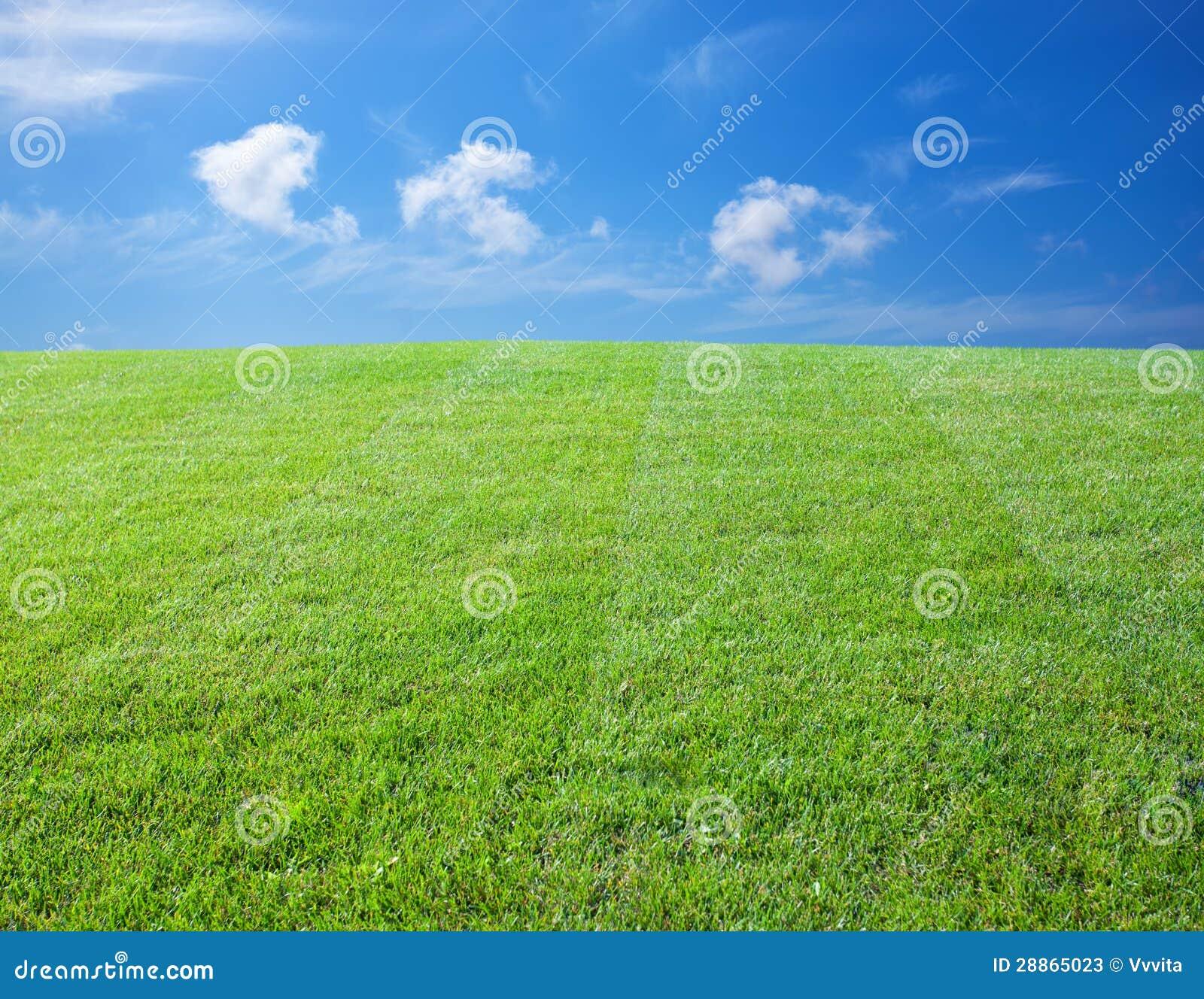 Grüner Rasen
