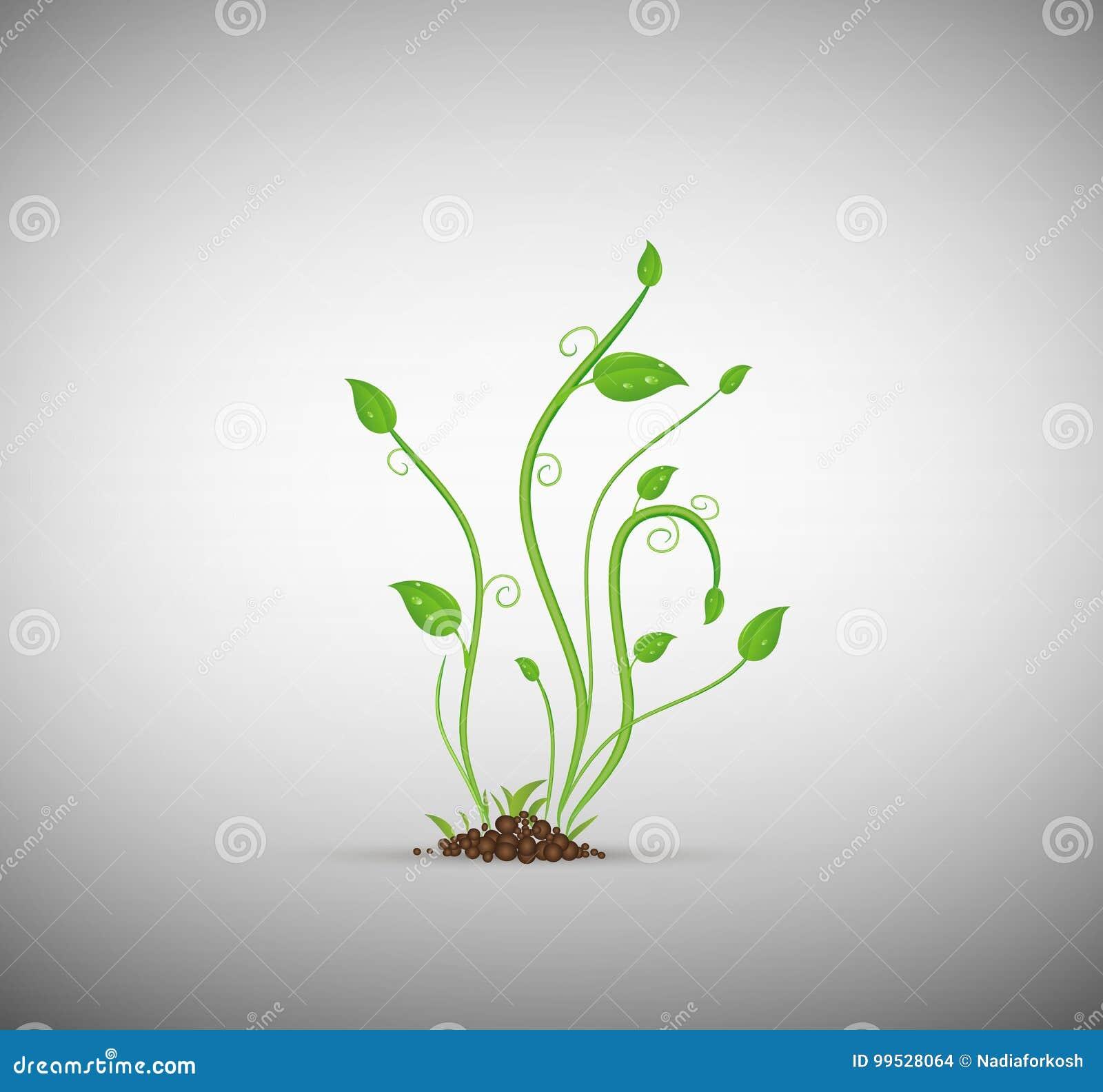 Grüner Sprössling im Boden lokalisiert,