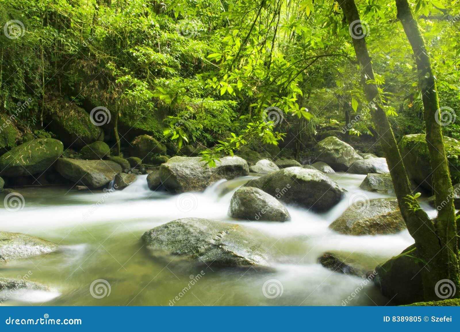 Grüner Wald und Strom