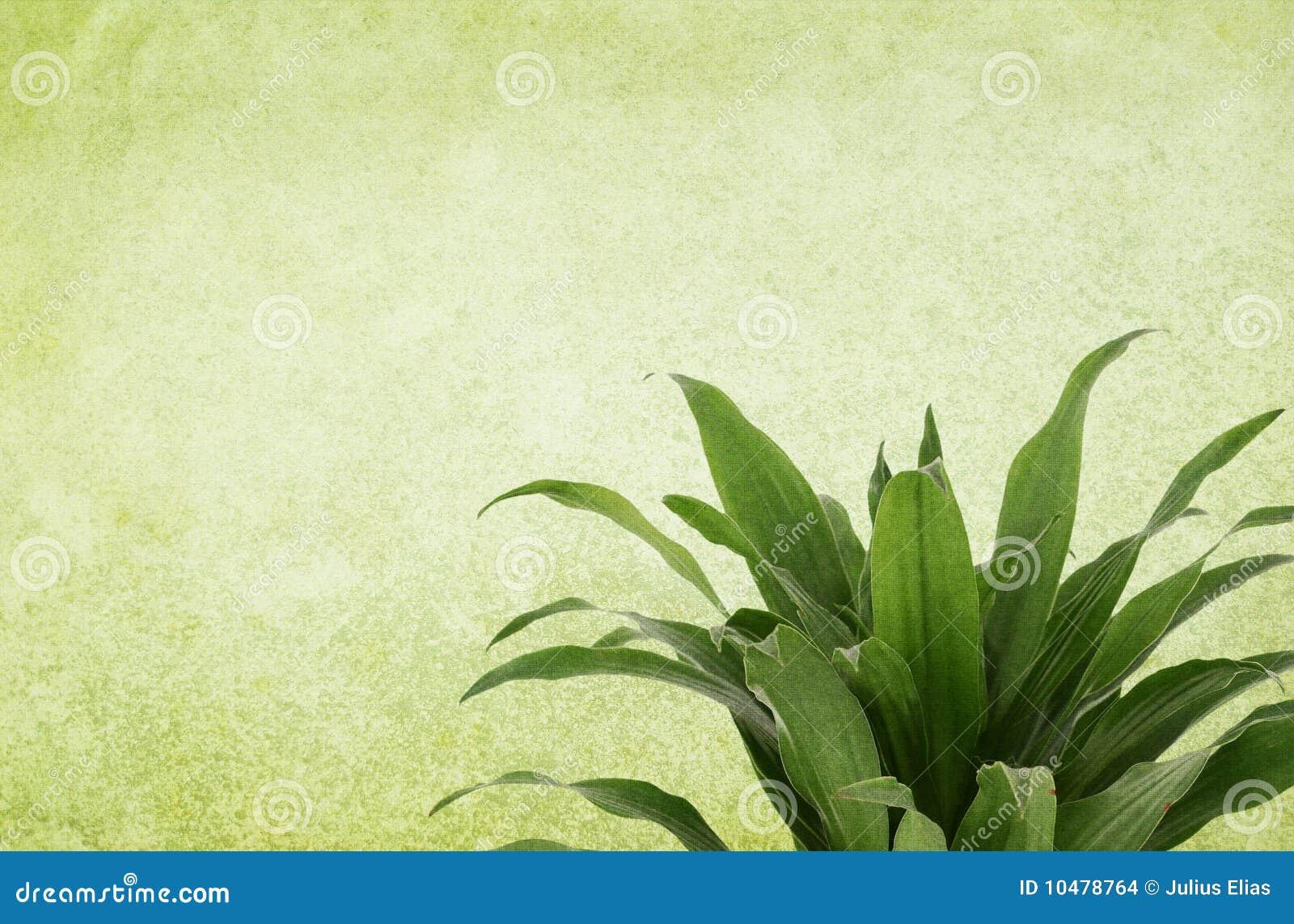 Grüner Weinlese-Hintergrund mit Anlage