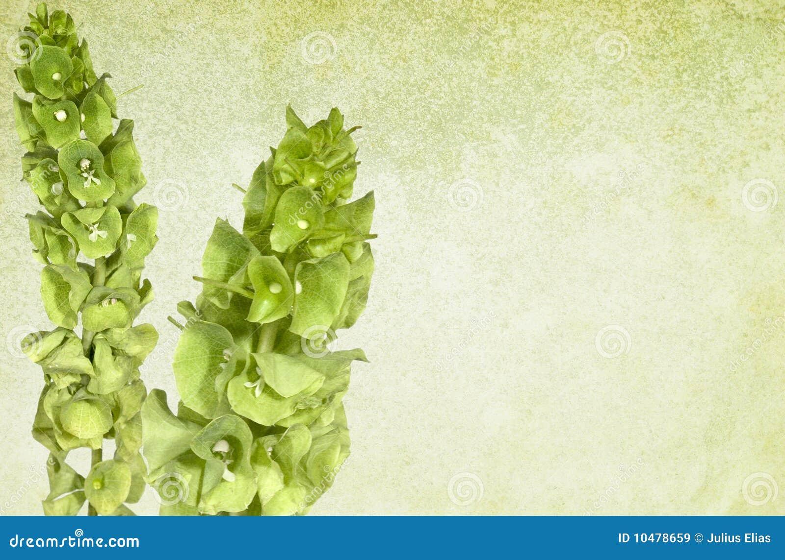 Grüner Weinlese-mit Blumenhintergrund