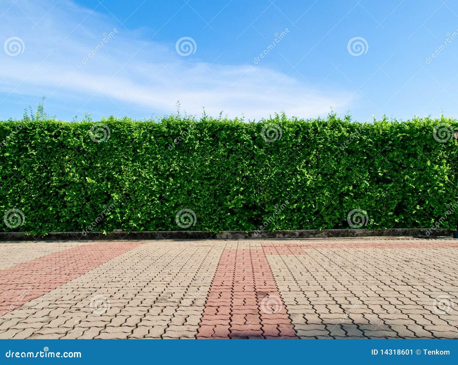 Grüner Zaun stockbild Bild von farbe blume betrieb