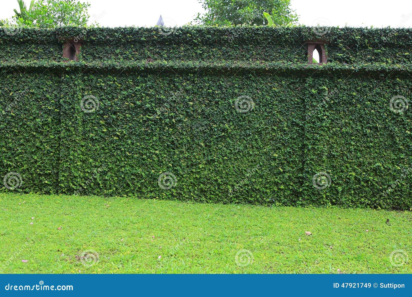 Grüner Zaun stockbild Bild von alter umgebung haupt